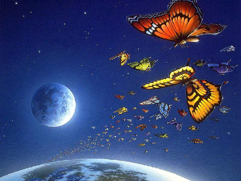 butterflyorbit.jpg